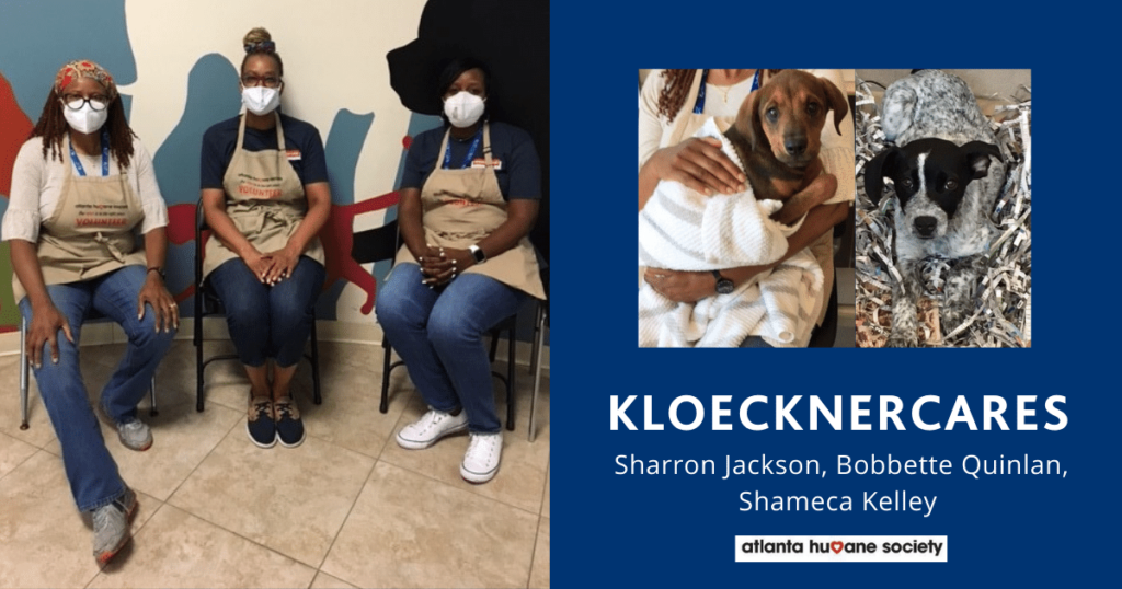 KloecknerCares Volunteer Day at Atlanta Humane Society